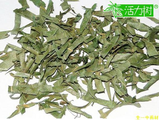 柿子叶茶,柿子叶功效与作用-中药方剂-全一中药